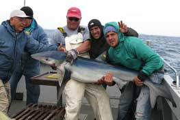 Shark fishing from Clifden, off the west coast of Ireland